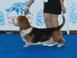 Worlds dog show Moscow